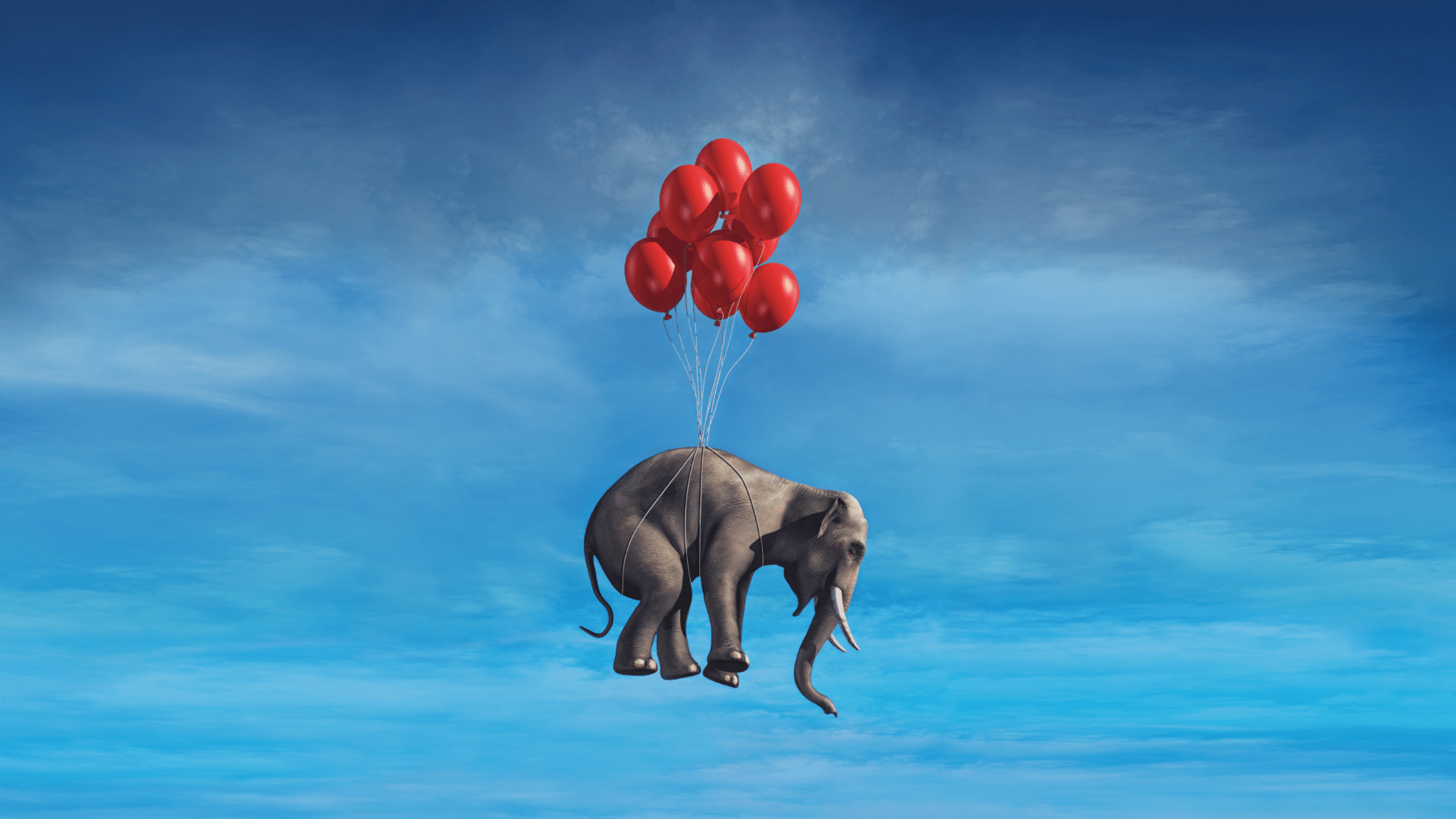 assemblify_key_visual_elefant